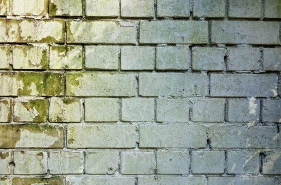 Jak usunąć pleśń z elewacji oraz ścian wewnątrz